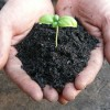 室内で栽培している黒土の販売