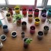 栽培に彩りと成長に個性を感じる