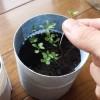 失敗に學ぶ花植物の移植