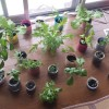 室内が緑に包まれる心地