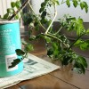 重力に120度逆らい育つ室内野菜