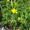 コンクリート脇に自然と咲く野花
