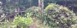 自然体に腐葉土を育む