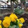 季節を呼吸する花々