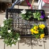 冬と遊ぶ花々