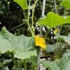 庭で身近に収穫菜園