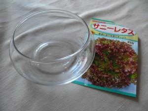 アクアプランターでレタスを栽培