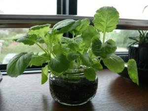 室内で栽培を楽しむブログをスタート