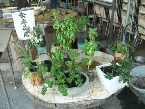 十時花園さんの食卓菜園
