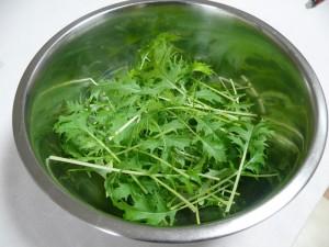 栽培38日目に水菜を収穫