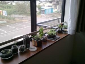 我が家の室内栽培