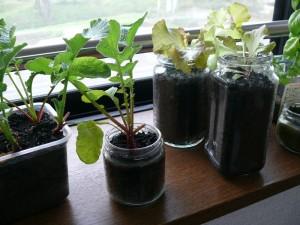 ビンプランターで室内栽培