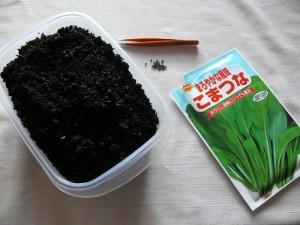 室内で小松菜を栽培