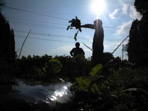太陽の真下で収穫祭