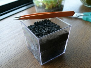 水菜の種を一粒蒔き