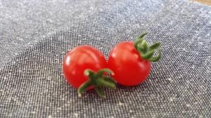 ジャガリコでミニトマト2015年