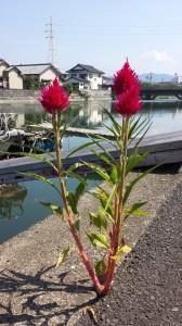 地球から咲く力強い草花
