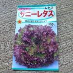 蒔いたサニーレタスの種