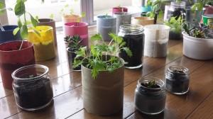 植物たちの生活