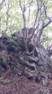 岩の上に育つ木々