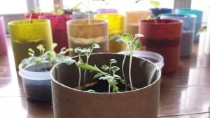 水菜の窓際栽培18日後