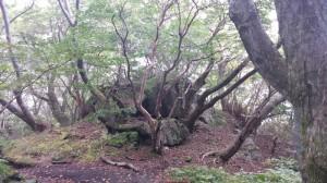 岩から生える木々