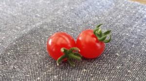 食べたい色合いのトマト