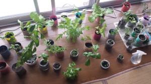 緑に包まれる室内栽培