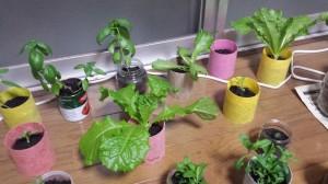 和紙プランターと葉もの野菜