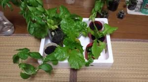 濃い色の野菜たち