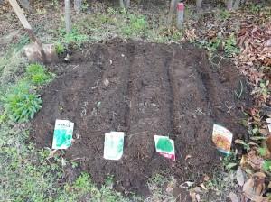 葉物を植える
