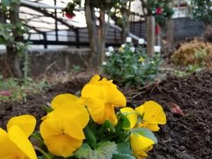 地に花々を植える